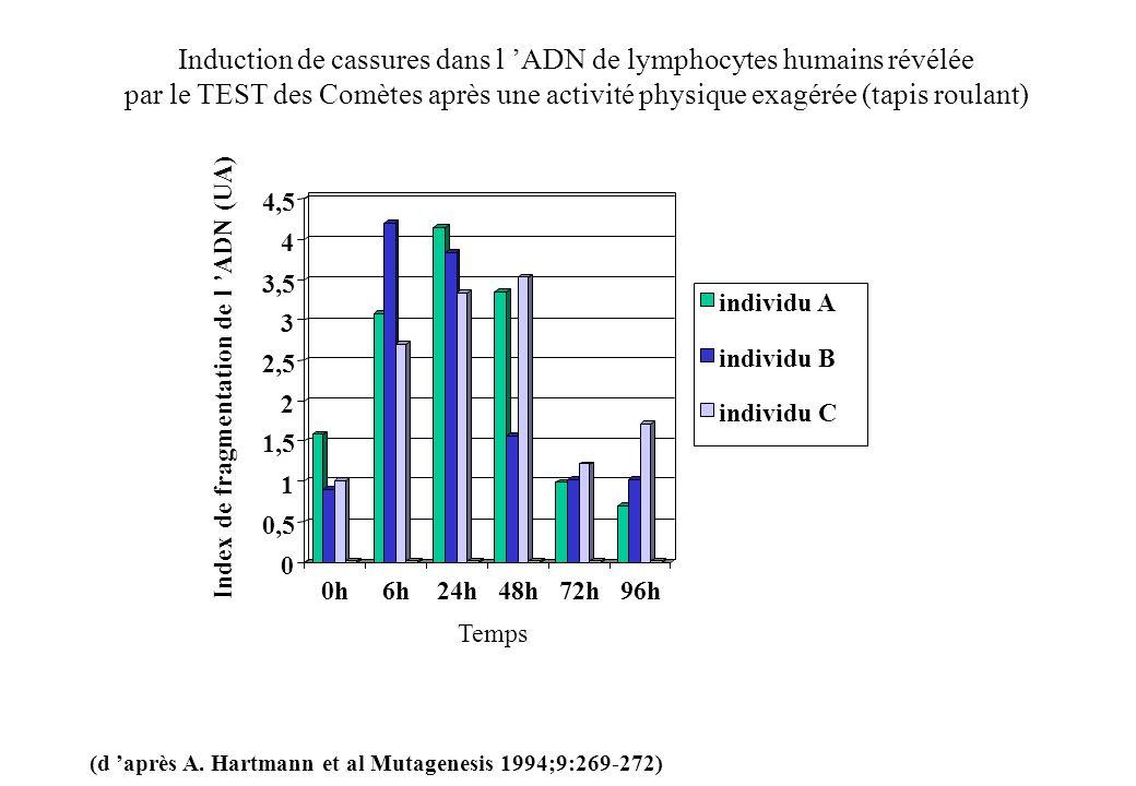 0 0,5 1 1,5 2 2,5 3 3,5 4 4,5 0h6h24h48h72h96h individu A individu B individu C Index de fragmentation de l ADN (UA) Temps Induction de cassures dans