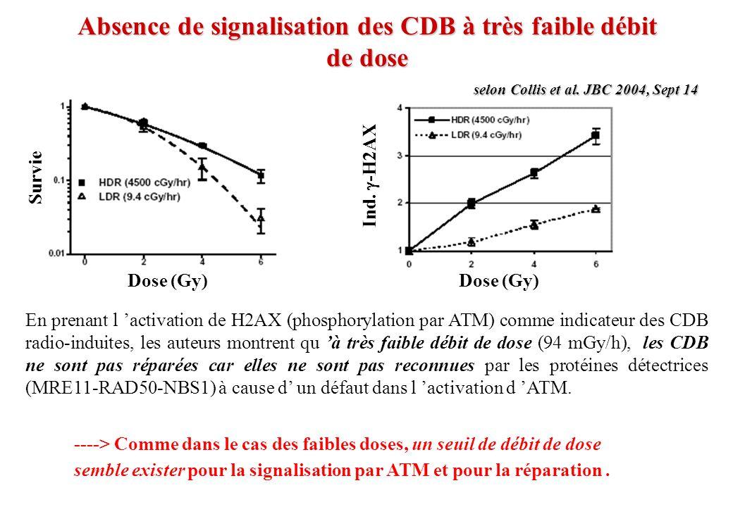En prenant l activation de H2AX (phosphorylation par ATM) comme indicateur des CDB radio-induites, les auteurs montrent qu à très faible débit de dose