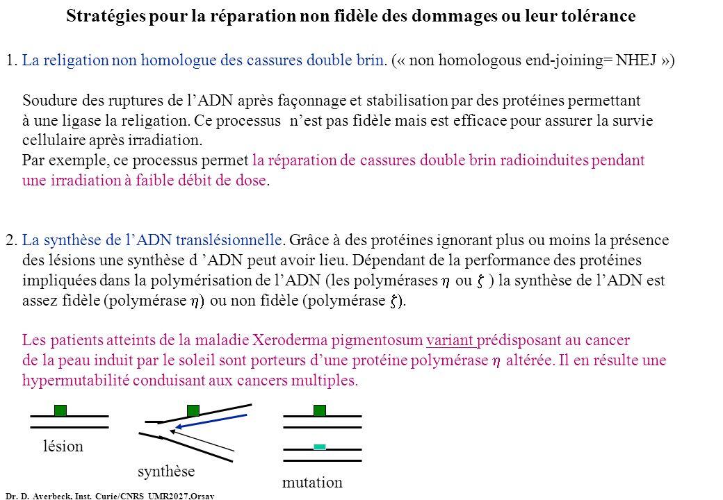 Stratégies pour la réparation non fidèle des dommages ou leur tolérance 1. La religation non homologue des cassures double brin. (« non homologous end