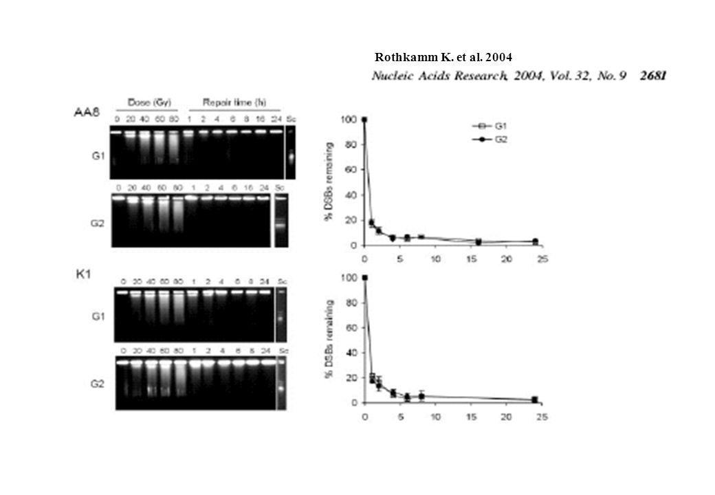 Rothkamm K. et al. 2004