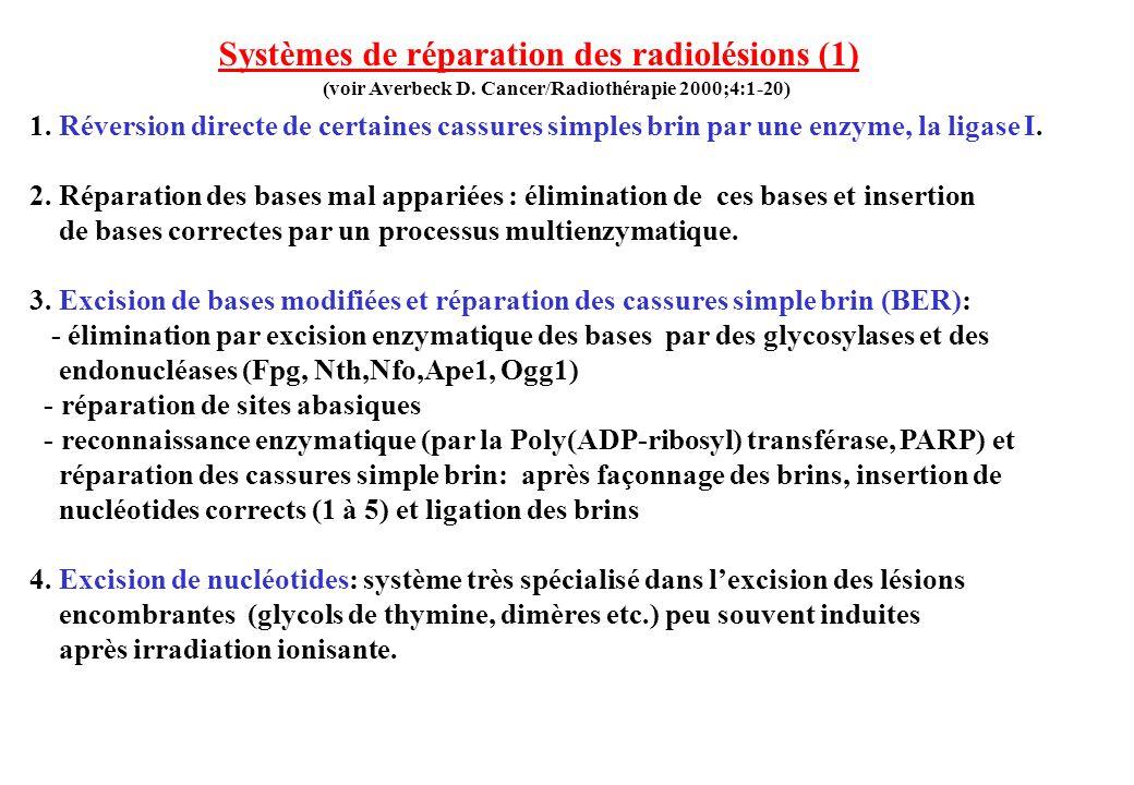 1. Réversion directe de certaines cassures simples brin par une enzyme, la ligase I. 2. Réparation des bases mal appariées : élimination de ces bases