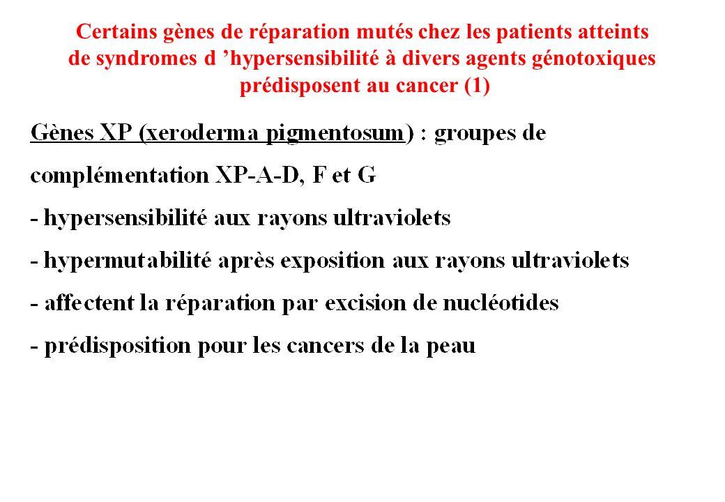 Certains gènes de réparation mutés chez les patients atteints de syndromes d hypersensibilité à divers agents génotoxiques prédisposent au cancer (1)