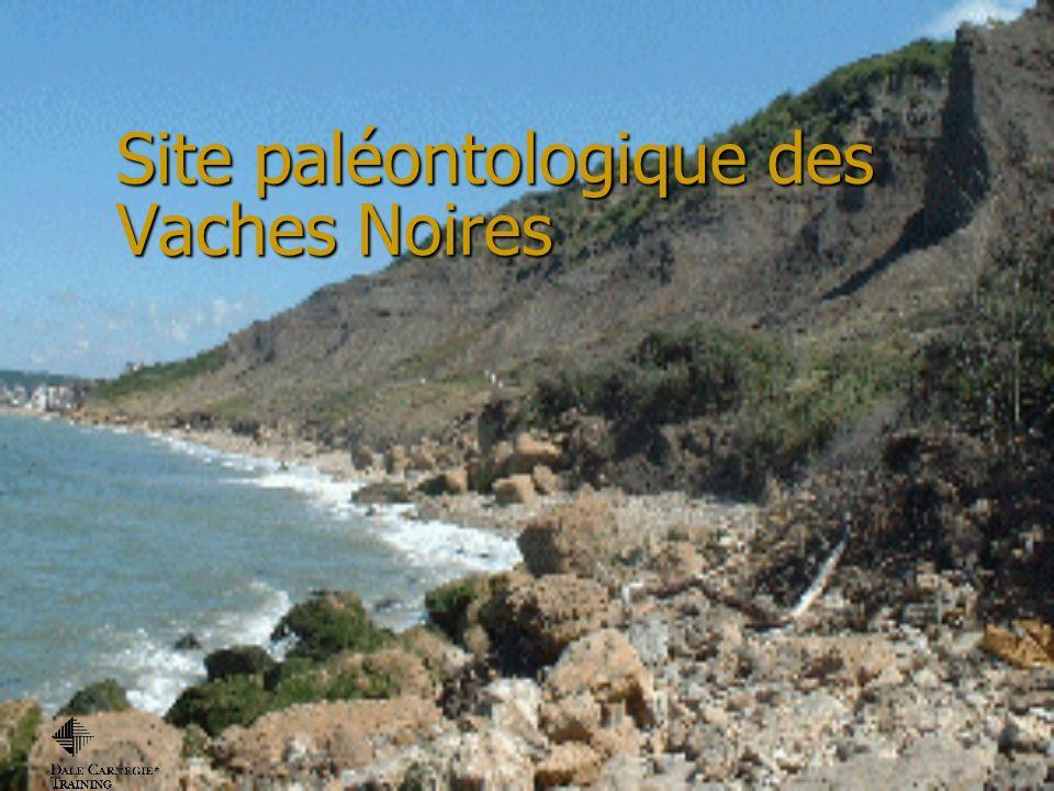 Les falaises de Villers sur Mer dans le Calvados sont plus connues sous le nom de Vaches Noires.