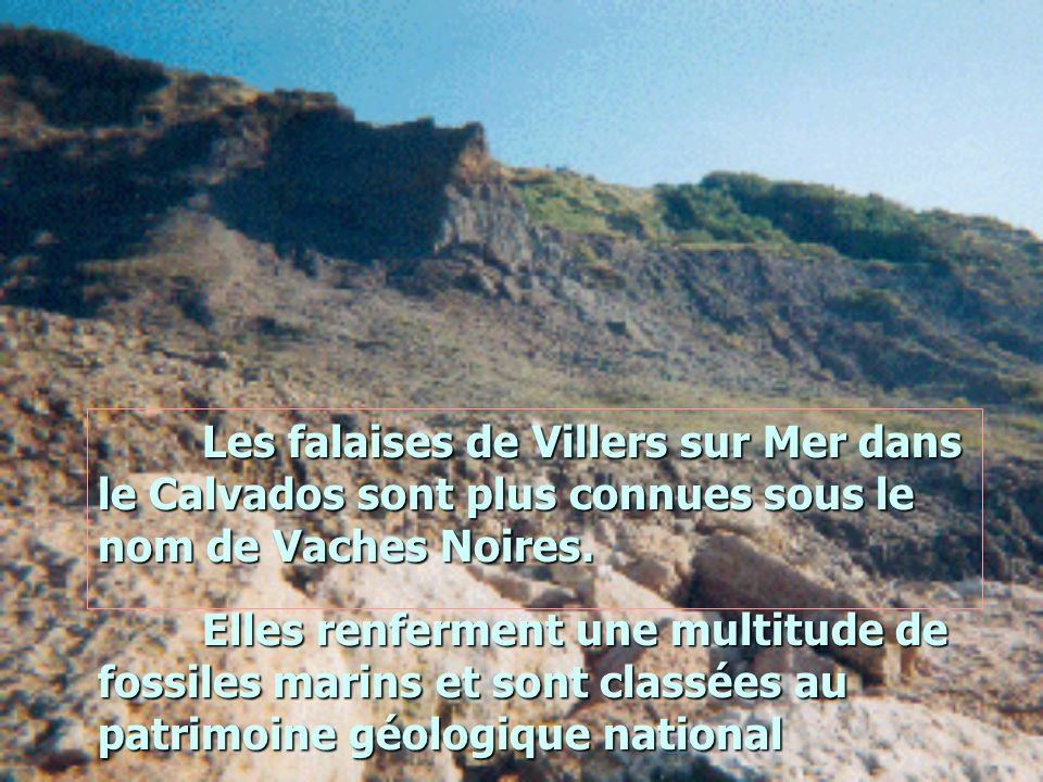 Les falaises de Villers sur Mer dans le Calvados sont plus connues sous le nom de Vaches Noires. Elles renferment une multitude de fossiles marins et