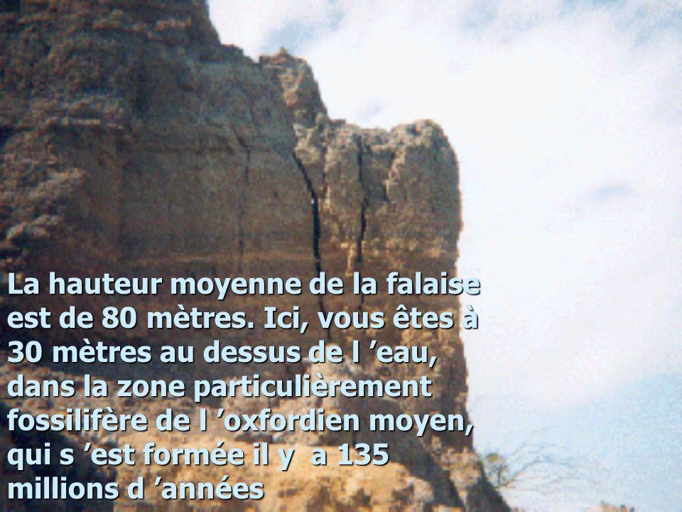 La hauteur moyenne de la falaise est de 80 mètres. Ici, vous êtes à 30 mètres au dessus de l eau, dans la zone particulièrement fossilifère de l oxfor