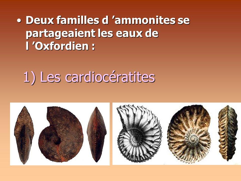 1) Les cardiocératites Deux familles d ammonites se partageaient les eaux de l Oxfordien :