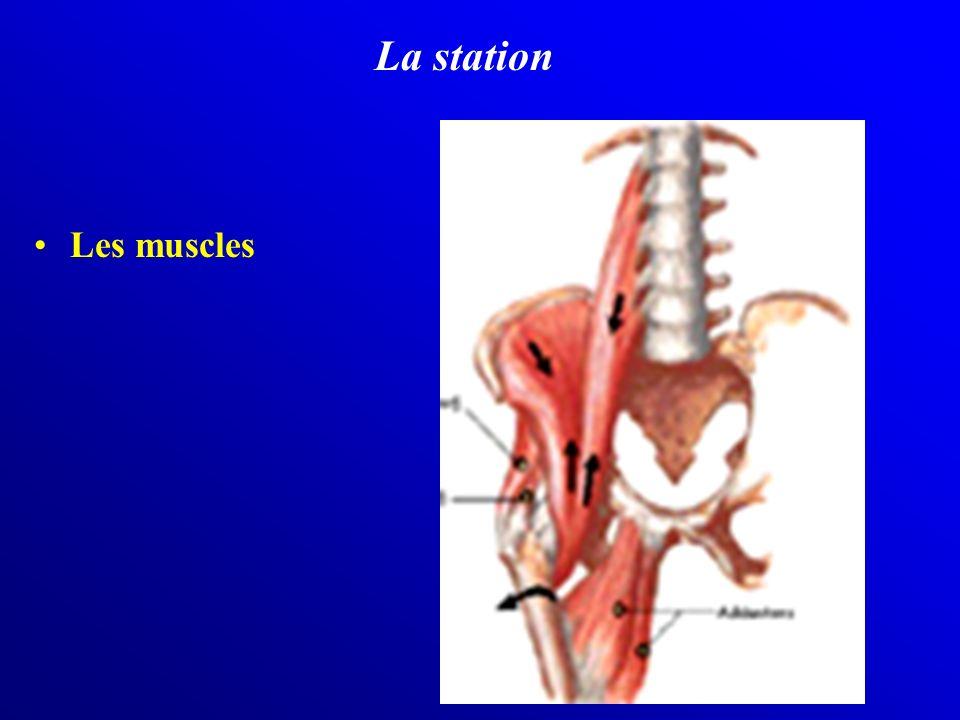 La station Les muscles
