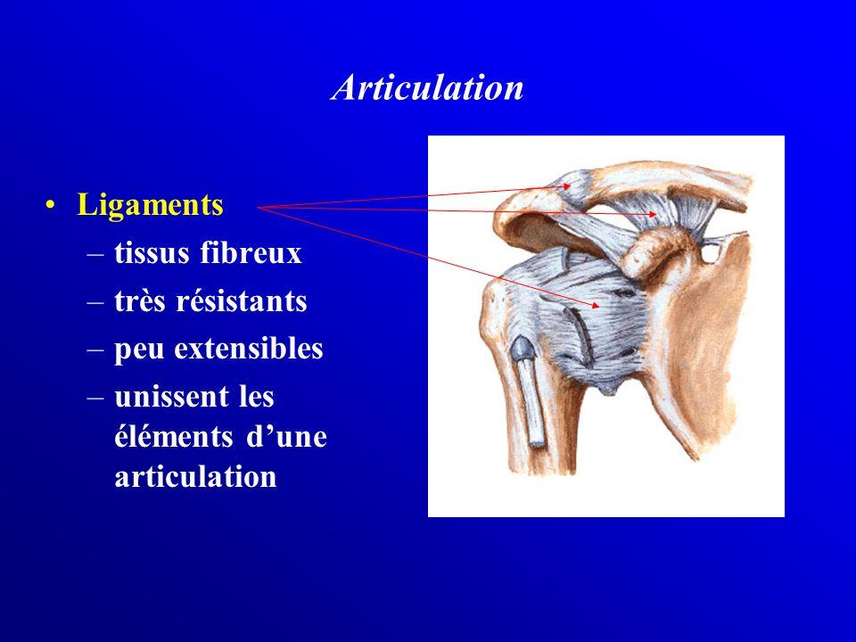 Ligaments –tissus fibreux –très résistants –peu extensibles –unissent les éléments dune articulation Articulation
