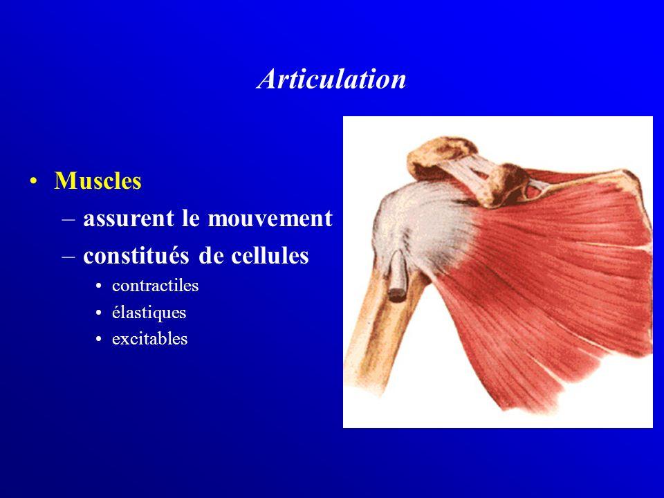 Muscles –assurent le mouvement –constitués de cellules contractiles élastiques excitables