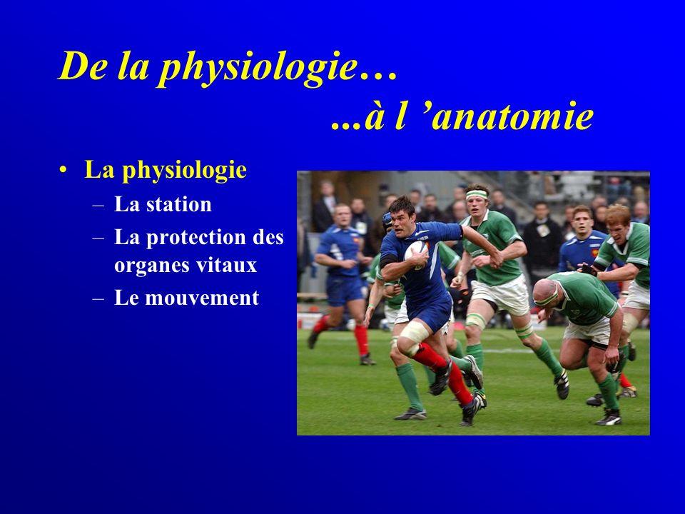 De la physiologie…...à l anatomie La physiologie –La station –La protection des organes vitaux –Le mouvement