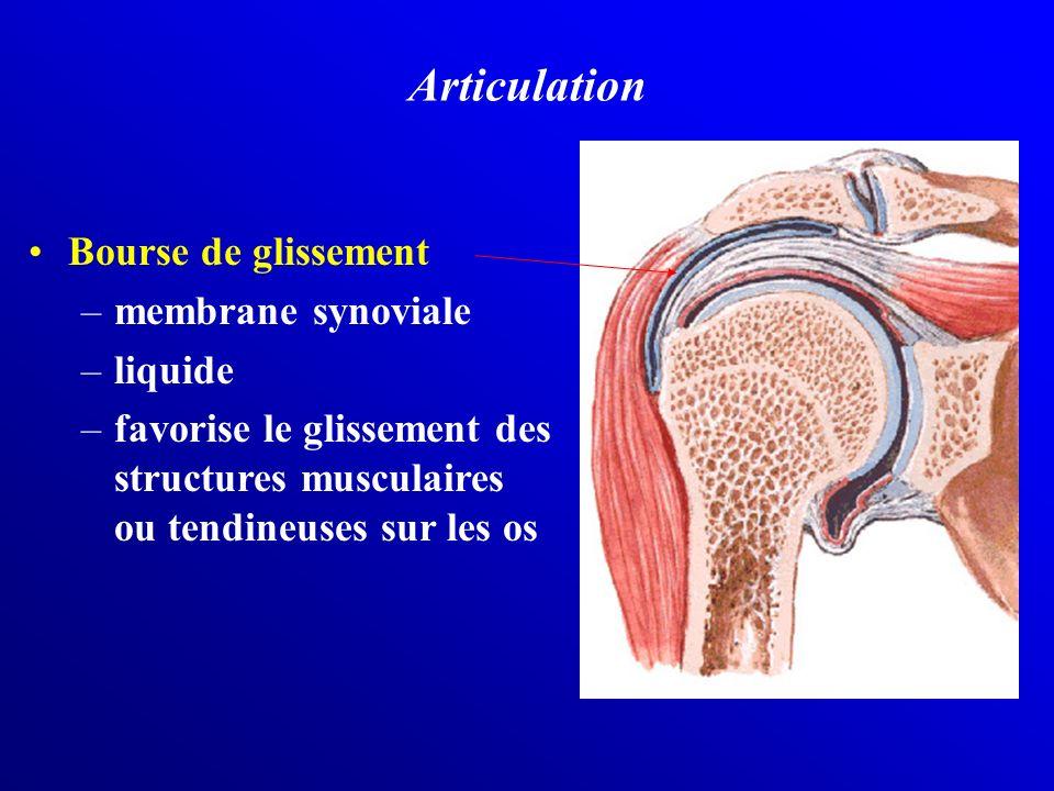 Articulation Bourse de glissement –membrane synoviale –liquide –favorise le glissement des structures musculaires ou tendineuses sur les os