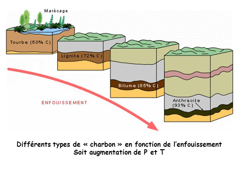 Différents types de « charbon » en fonction de lenfouissement Soit augmentation de P et T