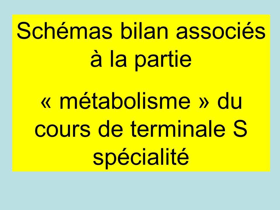 Schémas bilan associés à la partie « métabolisme » du cours de terminale S spécialité