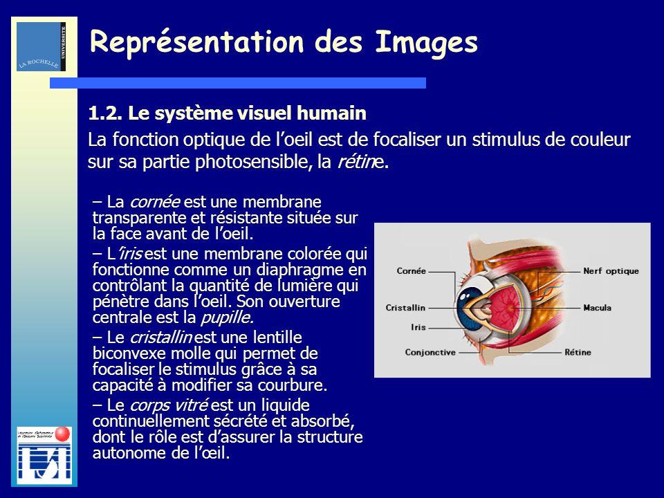 Laboratoire dInformatique et dImagerie Industrielle Représentation des Images – La cornée est une membrane transparente et résistante située sur la fa