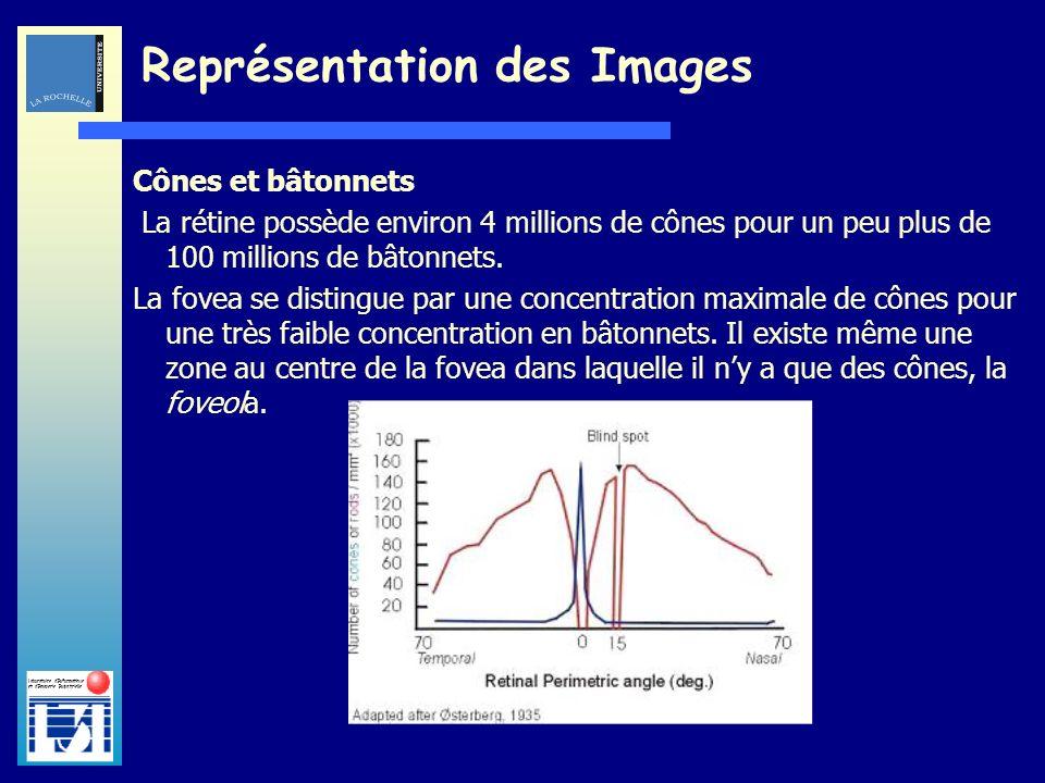 Laboratoire dInformatique et dImagerie Industrielle Cônes et bâtonnets La rétine possède environ 4 millions de cônes pour un peu plus de 100 millions