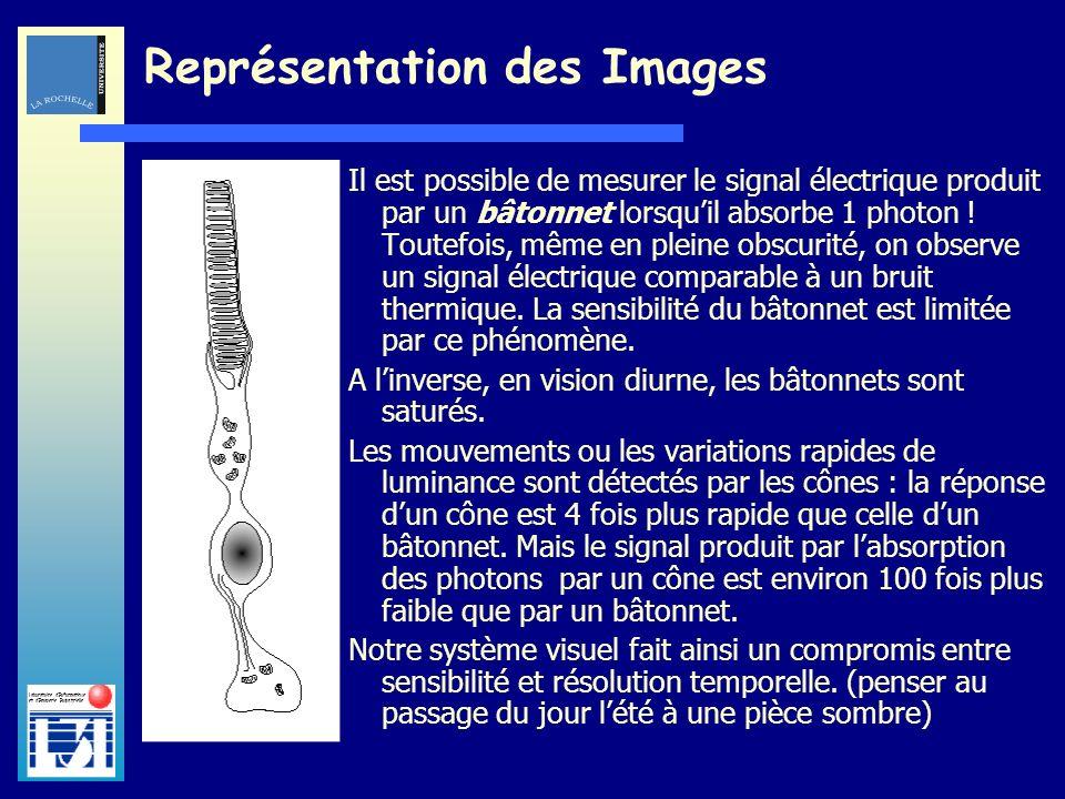 Laboratoire dInformatique et dImagerie Industrielle Il est possible de mesurer le signal électrique produit par un bâtonnet lorsquil absorbe 1 photon