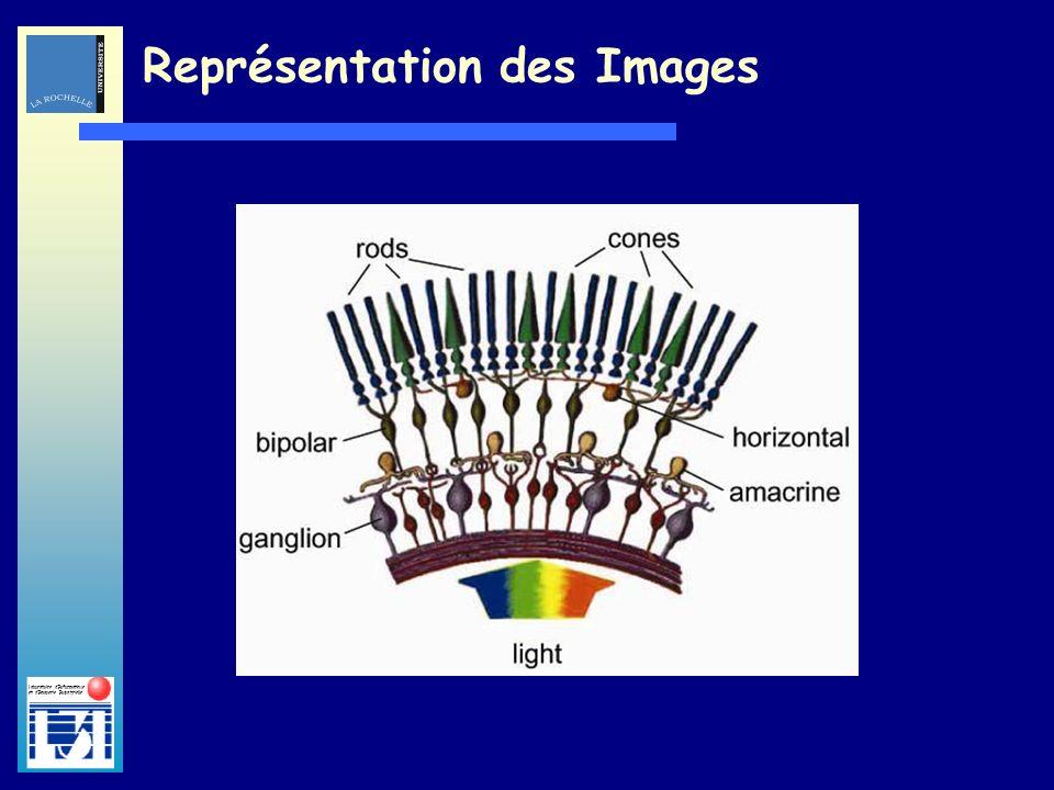 Laboratoire dInformatique et dImagerie Industrielle Représentation des Images