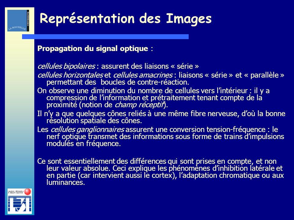 Laboratoire dInformatique et dImagerie Industrielle Propagation du signal optique : cellules bipolaires : assurent des liaisons « série » cellules hor