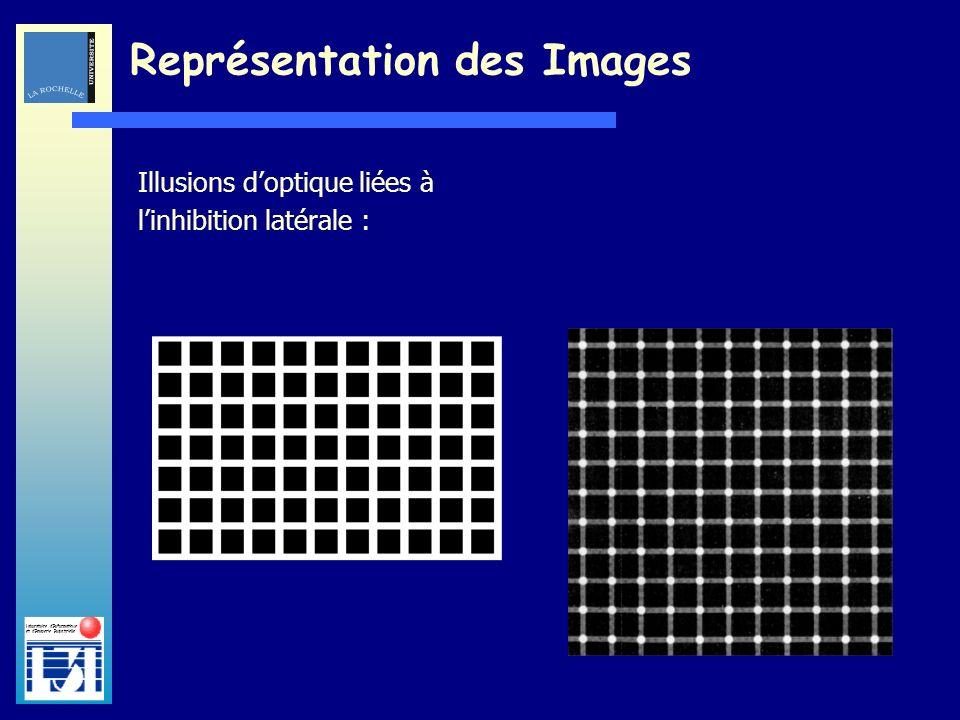 Laboratoire dInformatique et dImagerie Industrielle Illusions doptique liées à linhibition latérale : Représentation des Images