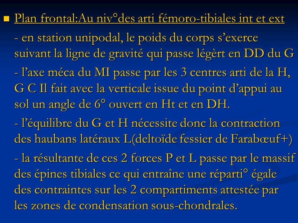 Plan frontal:Au niv°des arti fémoro-tibiales int et ext Plan frontal:Au niv°des arti fémoro-tibiales int et ext - en station unipodal, le poids du cor