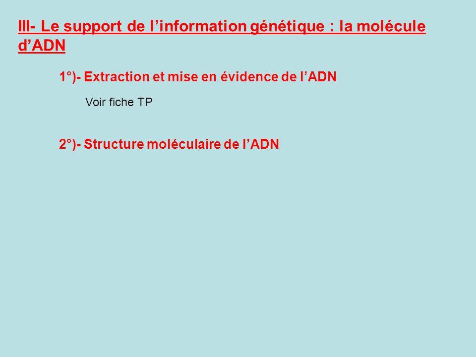 III- Le support de linformation génétique : la molécule dADN 1°)- Extraction et mise en évidence de lADN Voir fiche TP 2°)- Structure moléculaire de l