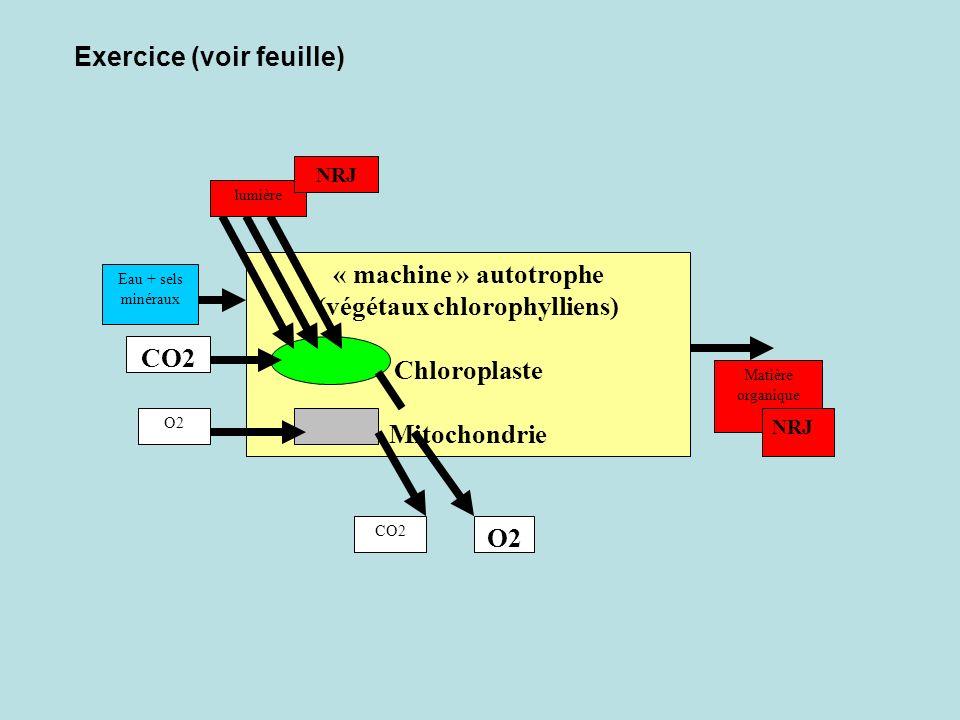 « machine » autotrophe (végétaux chlorophylliens) Chloroplaste Mitochondrie CO2 O2 CO2 Eau + sels minéraux lumière NRJ Matière organique NRJ O2 Exercice (voir feuille)