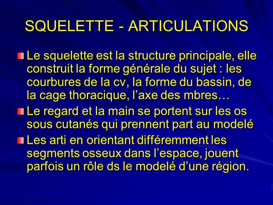 SQUELETTE - ARTICULATIONS Le squelette est la structure principale, elle construit la forme générale du sujet : les courbures de la cv, la forme du ba