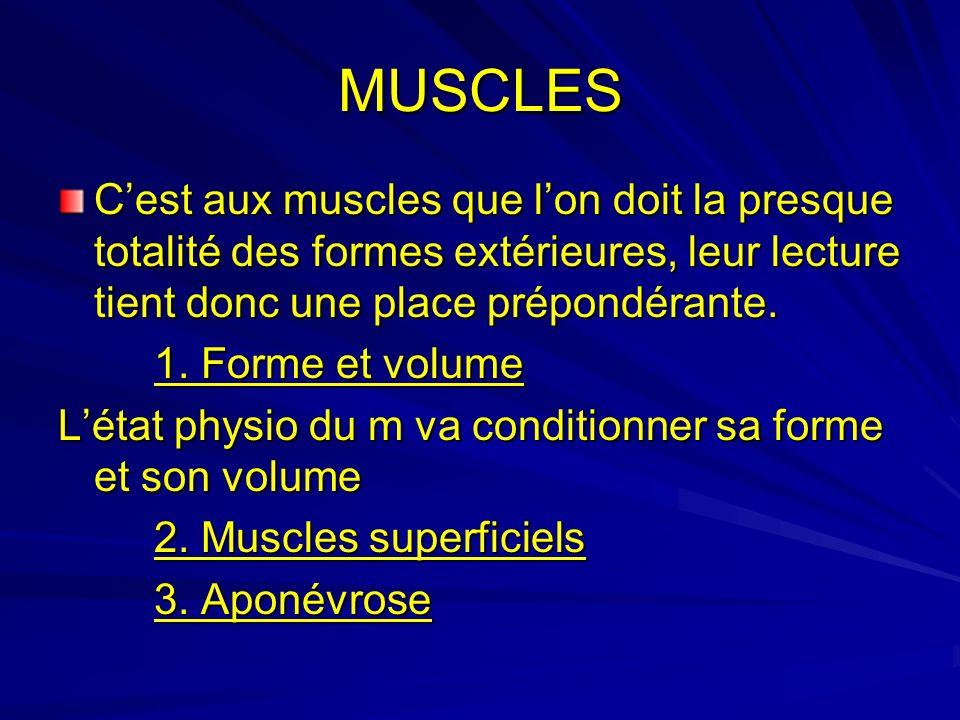 MUSCLES Cest aux muscles que lon doit la presque totalité des formes extérieures, leur lecture tient donc une place prépondérante. 1. Forme et volume