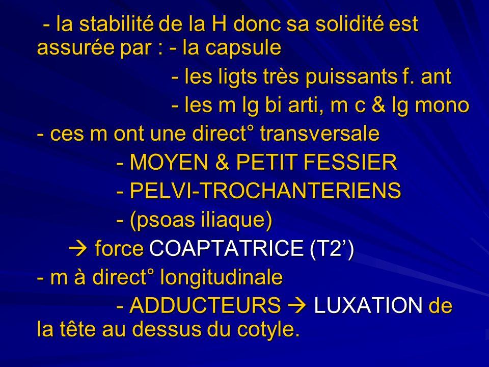 ANATOMIE FONCTIONNELLE DE LA H - la statique articulaire : 1.