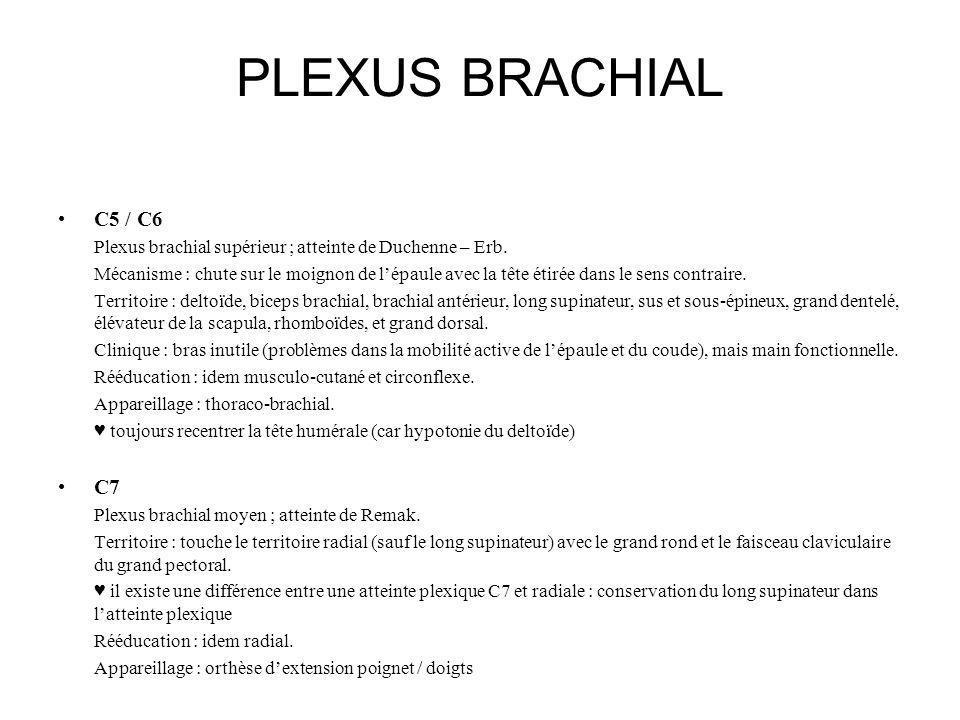 PLEXUS BRACHIAL C5 / C6 Plexus brachial supérieur ; atteinte de Duchenne – Erb. Mécanisme : chute sur le moignon de lépaule avec la tête étirée dans l