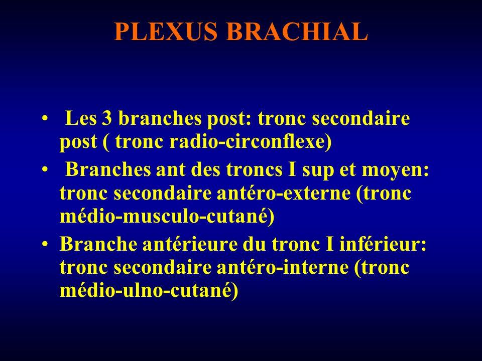 PLEXUS BRACHIAL Les 3 branches post: tronc secondaire post ( tronc radio-circonflexe) Branches ant des troncs I sup et moyen: tronc secondaire antéro-