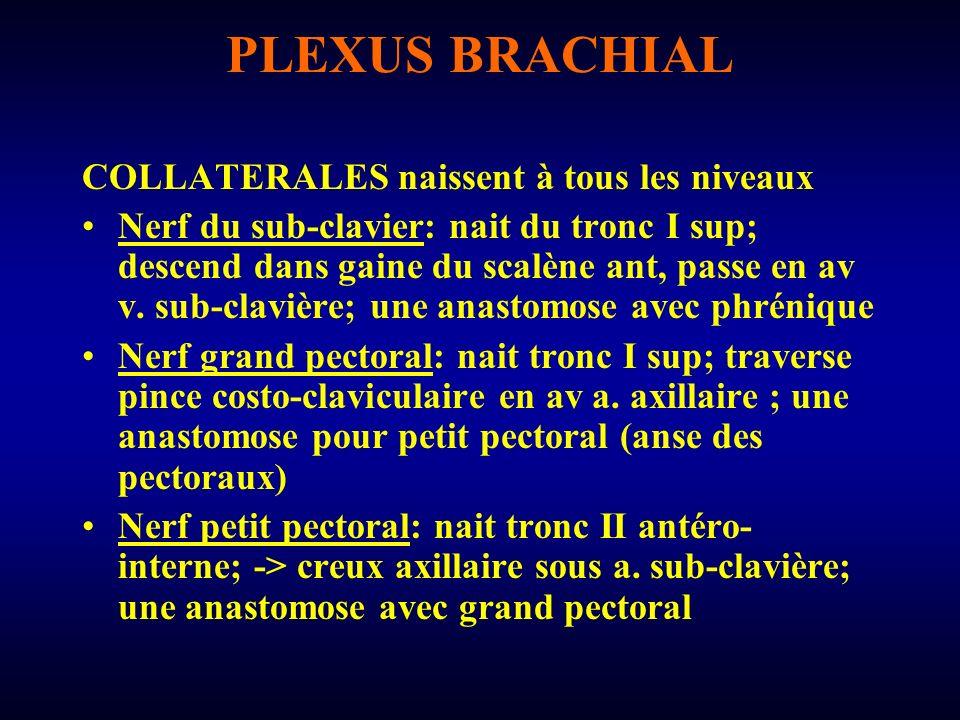 PLEXUS BRACHIAL Nerf supra-scapulaire: naît du 5ème nerf cervical; descend verticalement; quitte le creux supra-claviculaire par échancrure coracoïdienne de lomoplate -> épaule; moteur supra et infra épineux Nerf de lélévateur de la scapula: nait de C5, longe scalène post Nerf du rhomboïde: idem Nerf supérieur du sub-scapulaire: nait du tronc I sup ou du tronc II post, longe face post plexus -> creux axillaire