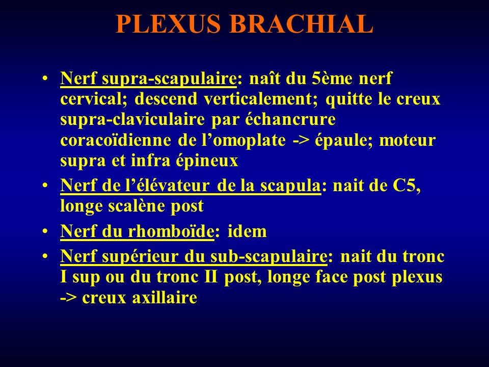 PLEXUS BRACHIAL Nerf du grand dentelé (nerf thoracique long): nait de C5 et C6; descend verticalement en arr du plexus au contact scalène post -> 2ème côte; entre dans creux axillaire Au niveau du creux axillaire: naissent du tronc II post –Nerf inférieur du sub-scapulaire –Nerf du grand rond –Nerf du grand dorsal
