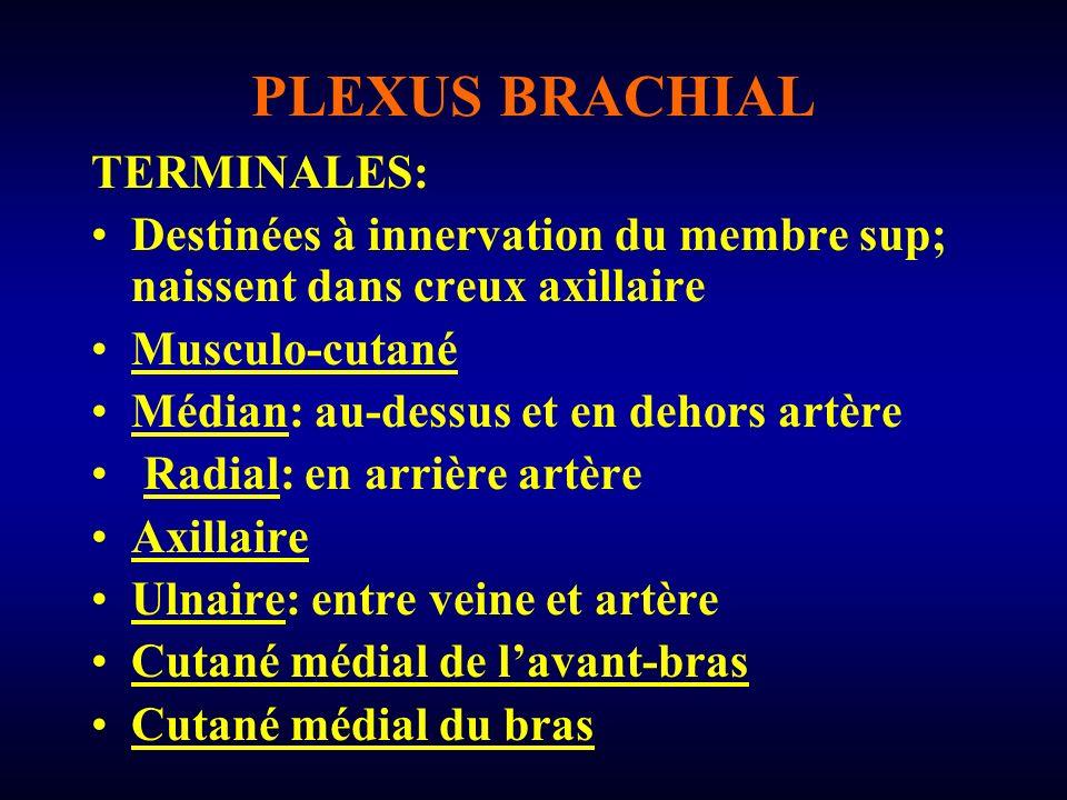PLEXUS BRACHIAL TERMINALES: Destinées à innervation du membre sup; naissent dans creux axillaire Musculo-cutané Médian: au-dessus et en dehors artère