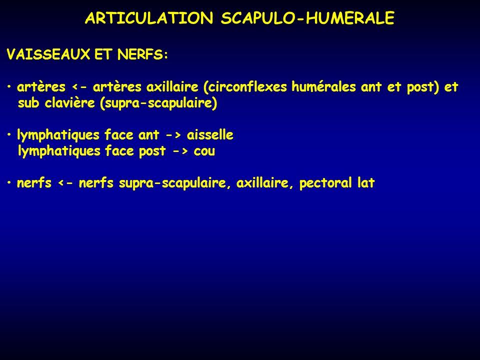 ARTICULATION SCAPULO-HUMERALE VAISSEAUX ET NERFS: artères <- artères axillaire (circonflexes humérales ant et post) et sub clavière (supra-scapulaire)