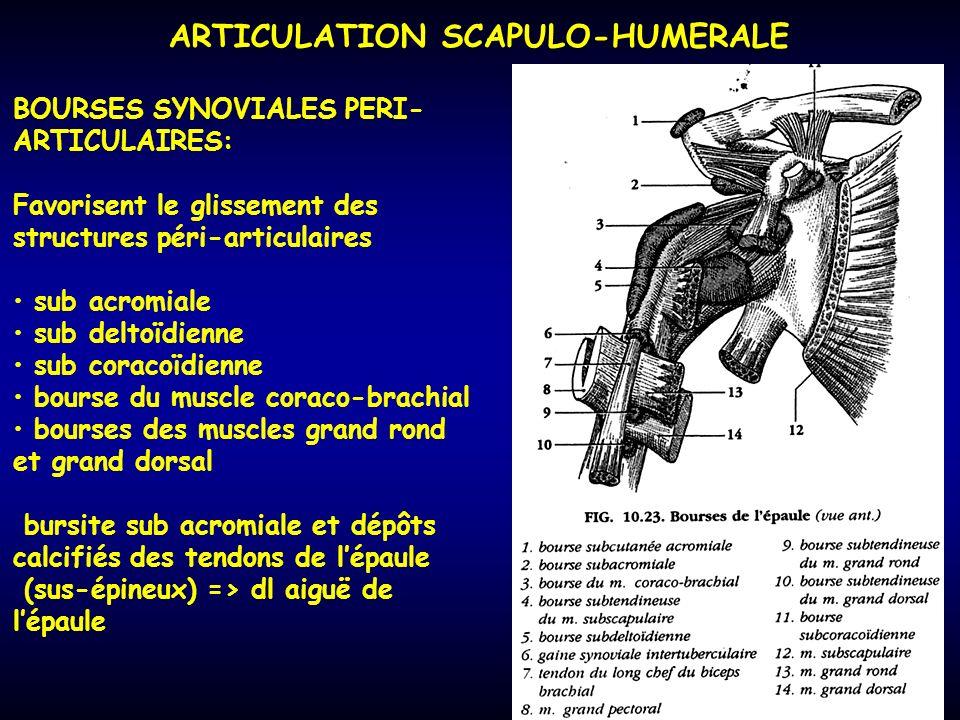 ARTICULATION SCAPULO-HUMERALE BOURSES SYNOVIALES PERI- ARTICULAIRES: Favorisent le glissement des structures péri-articulaires sub acromiale sub delto