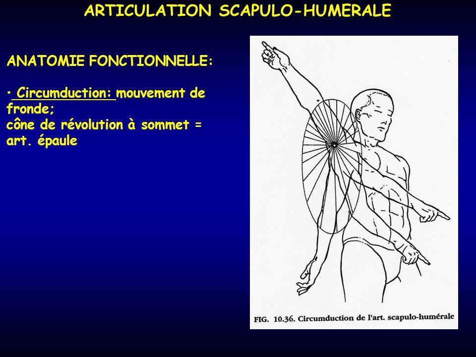 ARTICULATION SCAPULO-HUMERALE ANATOMIE FONCTIONNELLE: Circumduction: mouvement de fronde; cône de révolution à sommet = art. épaule