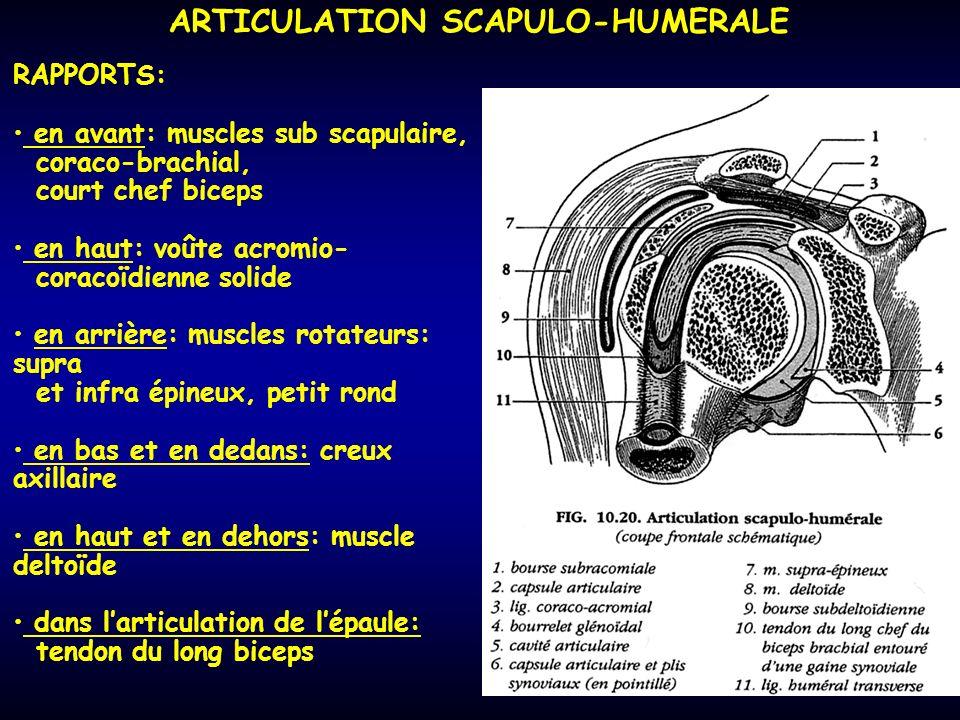 ARTICULATION SCAPULO-HUMERALE RAPPORTS: en avant: muscles sub scapulaire, coraco-brachial, court chef biceps en haut: voûte acromio- coracoïdienne sol