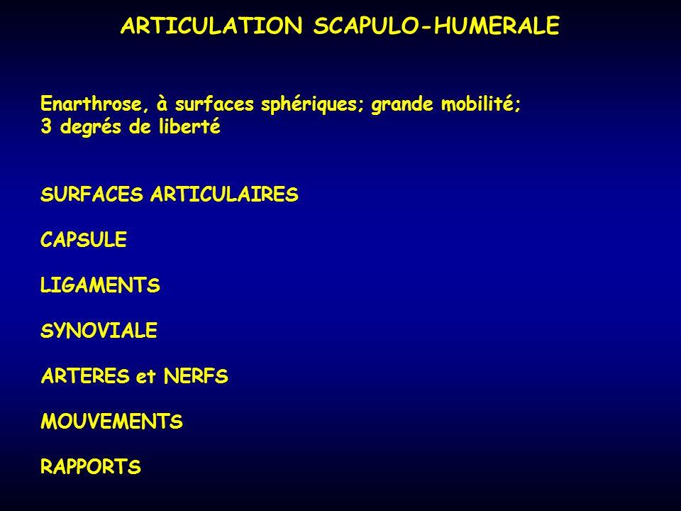 ARTICULATION SCAPULO-HUMERALE Enarthrose, à surfaces sphériques; grande mobilité; 3 degrés de liberté SURFACES ARTICULAIRES CAPSULE LIGAMENTS SYNOVIAL