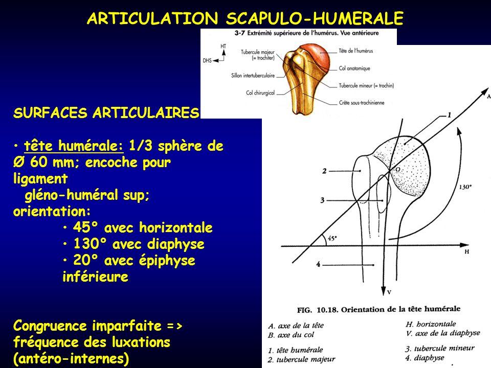 SURFACES ARTICULAIRES tête humérale: 1/3 sphère de Ø 60 mm; encoche pour ligament gléno-huméral sup; orientation: 45° avec horizontale 130° avec diaph