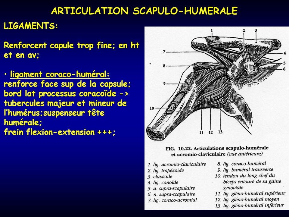 ARTICULATION SCAPULO-HUMERALE LIGAMENTS: Renforcent capule trop fine; en ht et en av; ligament coraco-huméral: renforce face sup de la capsule; bord l