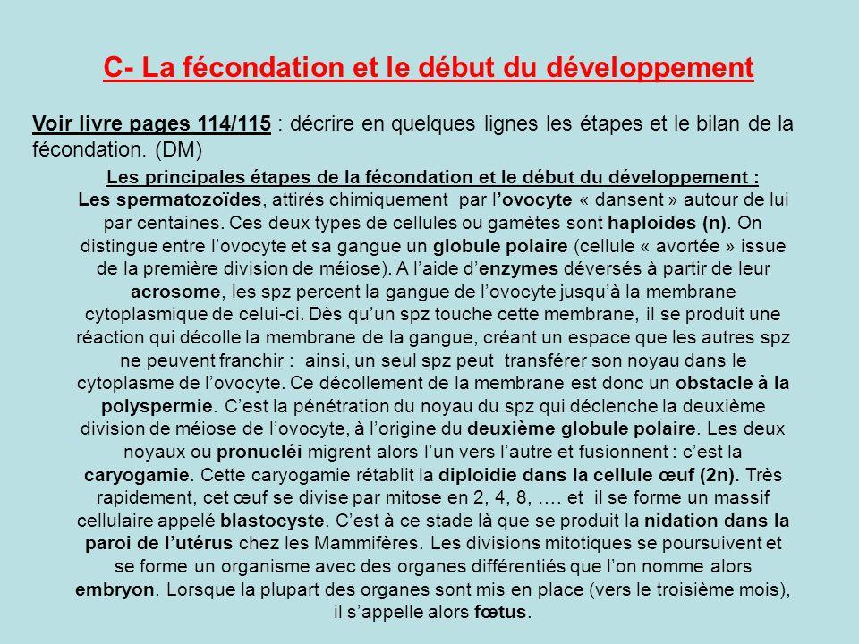 C- La fécondation et le début du développement Voir livre pages 114/115 : décrire en quelques lignes les étapes et le bilan de la fécondation. (DM) Le
