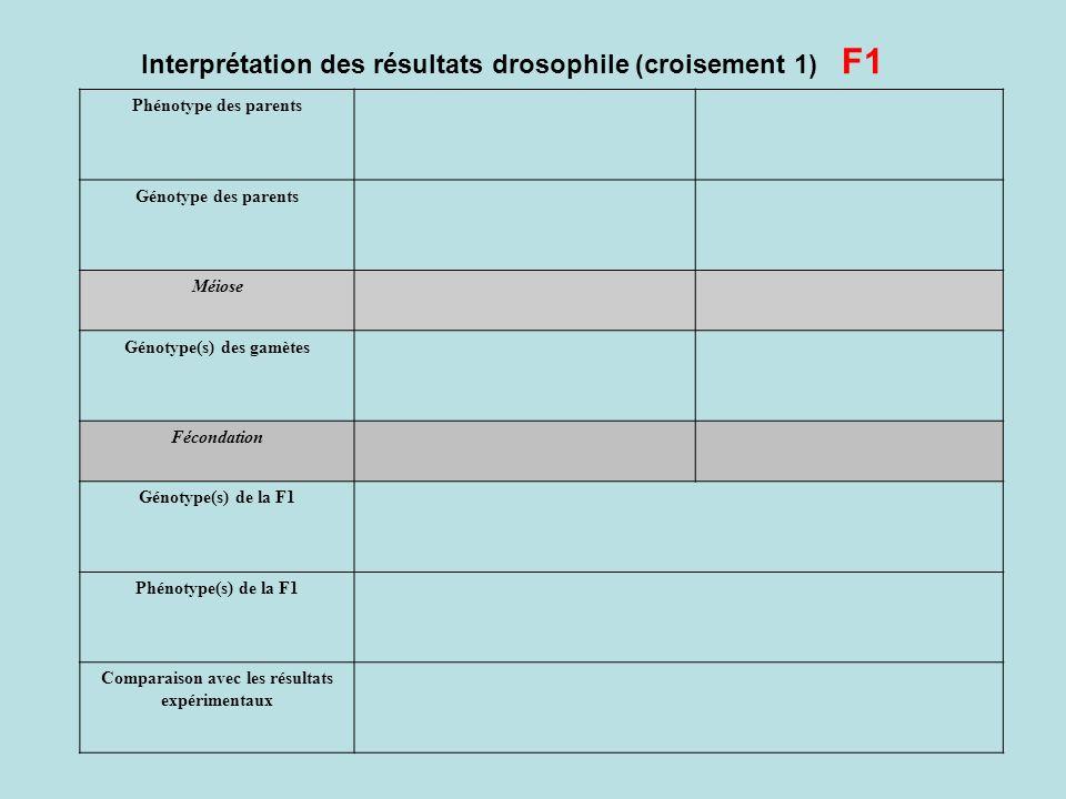 Interprétation des résultats drosophile (croisement 1) F1 Phénotype des parents Génotype des parents Méiose Génotype(s) des gamètes Fécondation Génoty