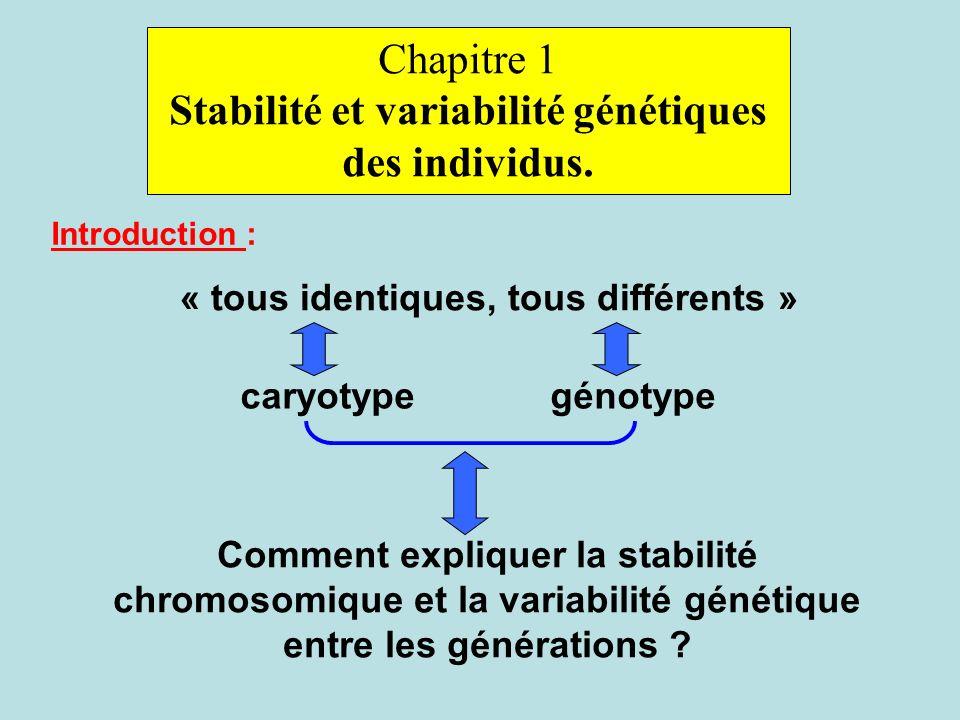 Chapitre 1 Stabilité et variabilité génétiques des individus. Introduction : « tous identiques, tous différents » caryotypegénotype Comment expliquer