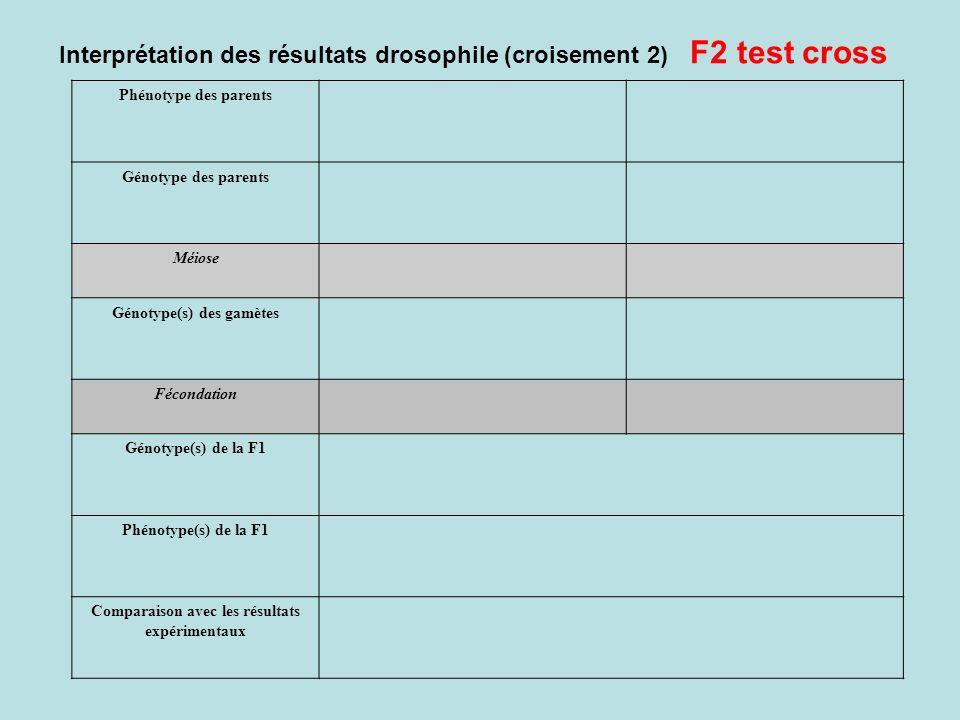 Interprétation des résultats drosophile (croisement 2) F2 test cross Phénotype des parents Génotype des parents Méiose Génotype(s) des gamètes Féconda