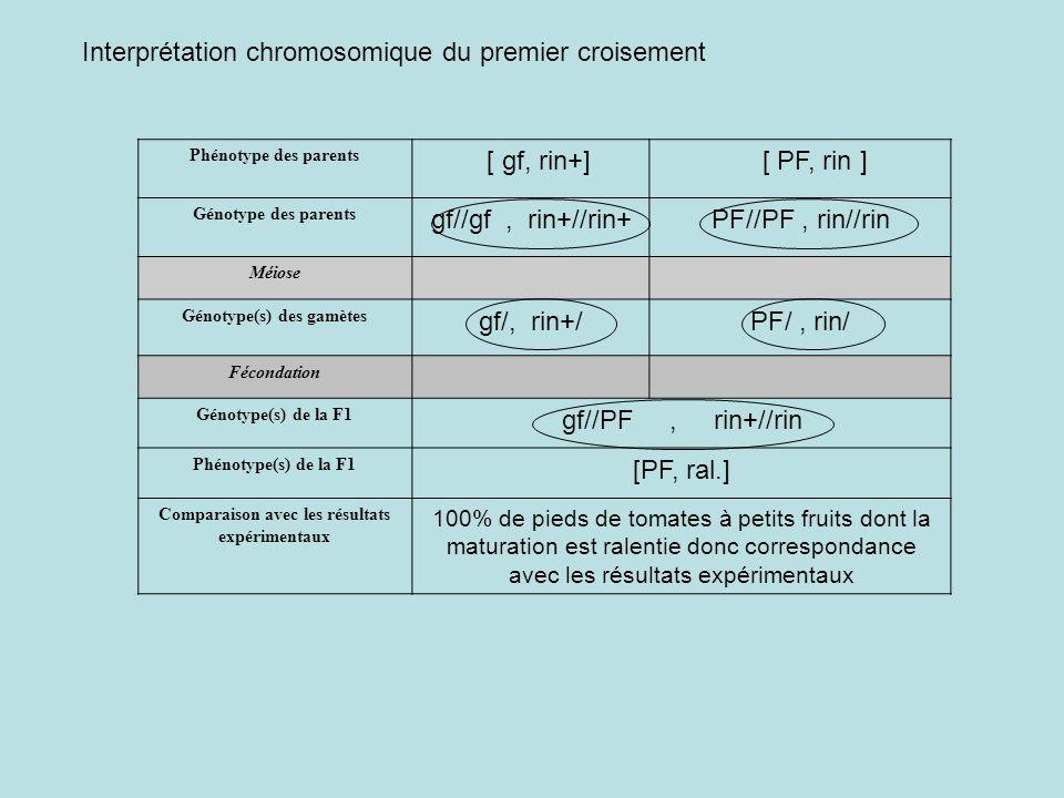 Phénotype des parents [ gf, rin+] [ PF, rin ] Génotype des parents gf//gf, rin+//rin+PF//PF, rin//rin Méiose Génotype(s) des gamètes gf/, rin+/PF/, ri
