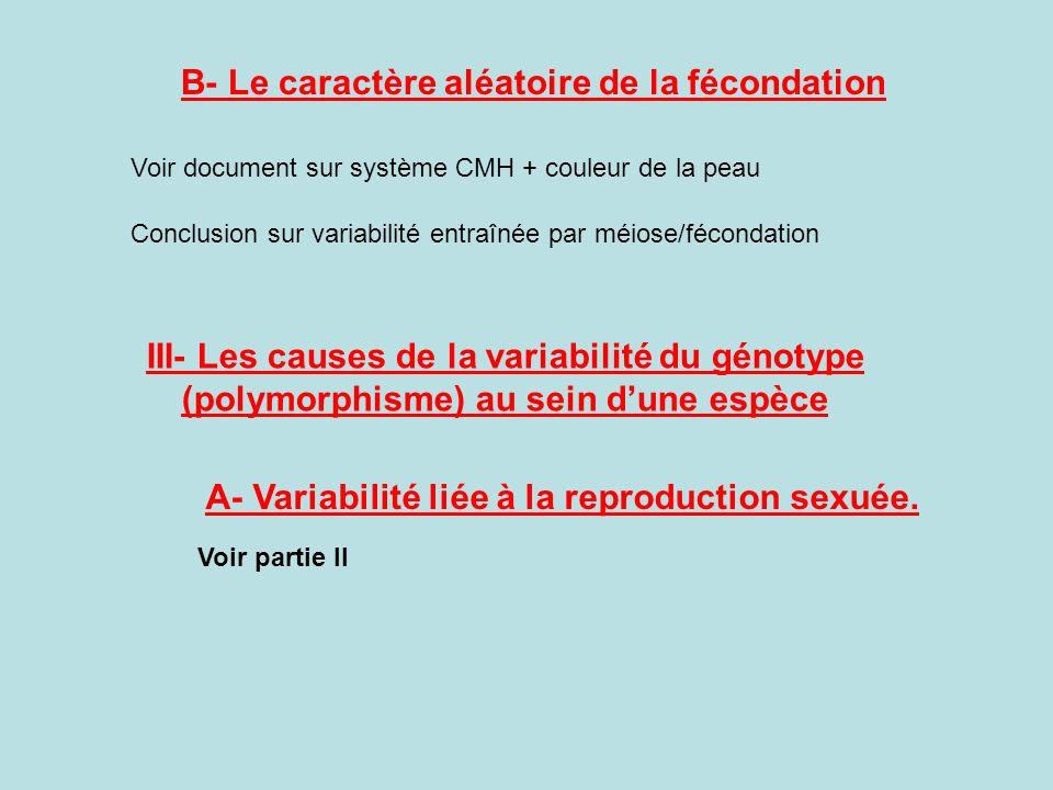 B- Le caractère aléatoire de la fécondation Voir document sur système CMH + couleur de la peau Conclusion sur variabilité entraînée par méiose/féconda