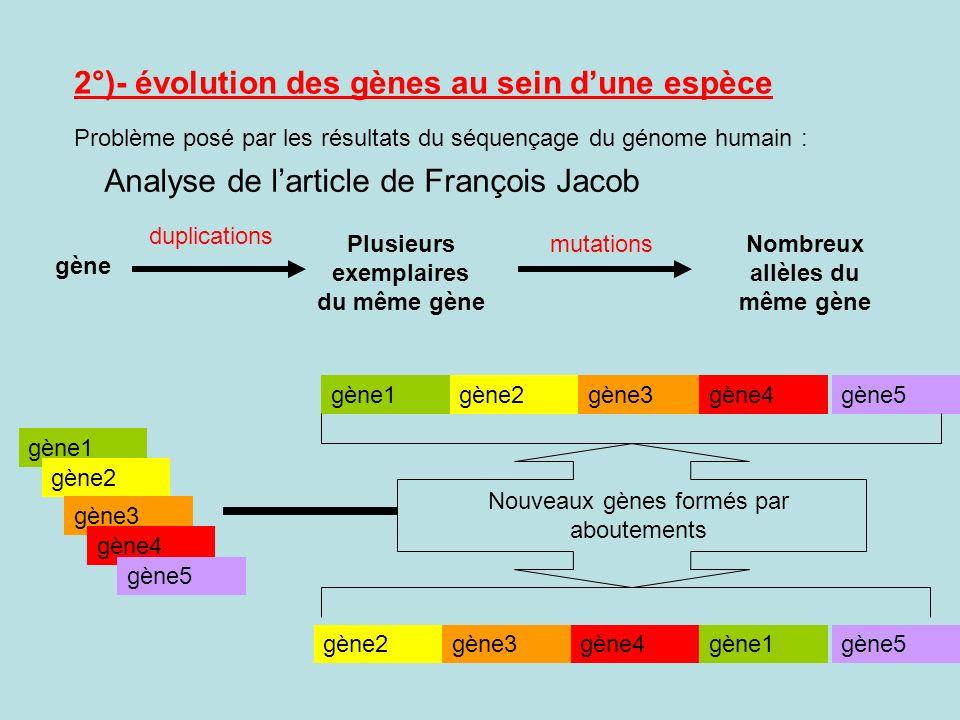 2°)- évolution des gènes au sein dune espèce Analyse de larticle de François Jacob gène Plusieurs exemplaires du même gène Nombreux allèles du même gè
