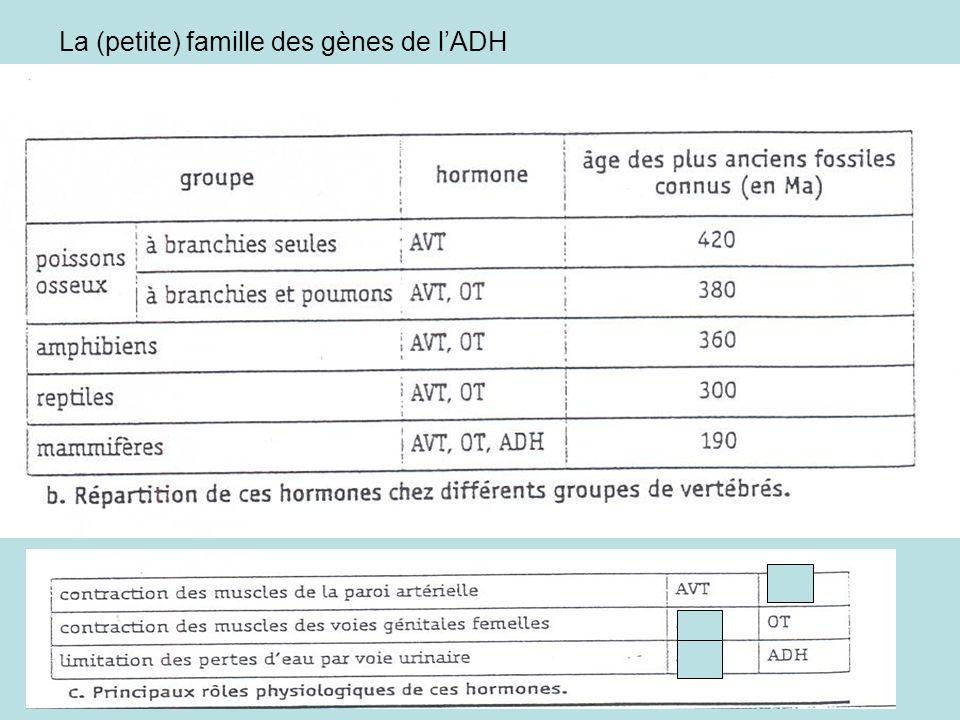La (petite) famille des gènes de lADH