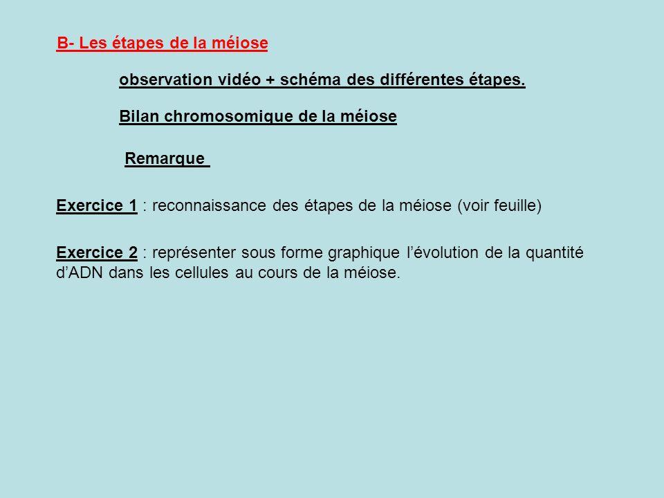 B- Les étapes de la méiose observation vidéo + schéma des différentes étapes. Bilan chromosomique de la méiose Remarque Exercice 1 : reconnaissance de
